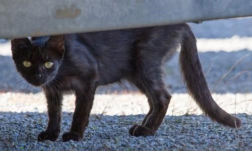 Was ist das Problem der Streunerkatzen?