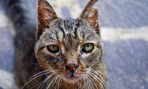 Wie kann man das Leid der Streunerkatzen verringern?