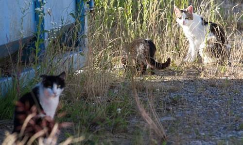 Woher kommen denn die vielen Streunerkatzen?