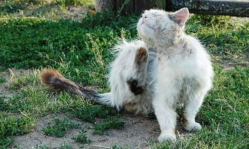 Was ist der Unterschied  zwischen Freigänger-Katzen und Streunerkatzen?