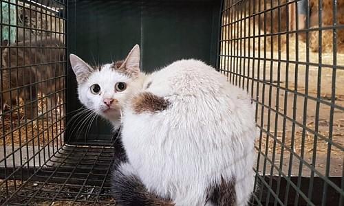 Kann man Streunerkatzen nicht einfangen und vermitteln?
