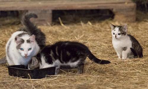 Soll man denn Streunerkatzen nicht füttern?
