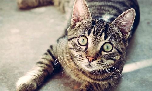 Trägt auch meine Katze zum Leid der Streunerkatzen bei?