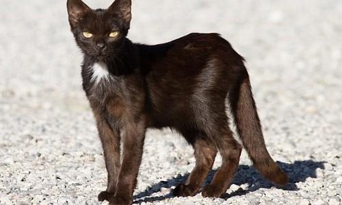 Ab welchem Alter kann eine Katze sich vermehren?