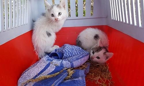 Ich habe junge Kätzchen gefunden, was soll ich tun?