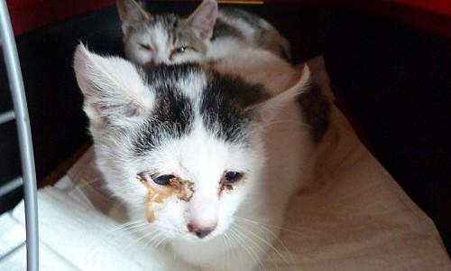 So können auch Sie helfen, Katzenleid zu reduzieren: