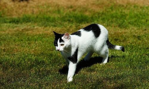 Noch immer kennen viele Katzenbesitzer das Problem des Freigangs nicht