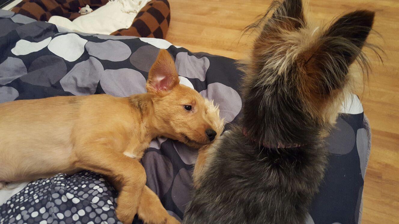 Spot, Terrier Mischling im Tierheim - Pfotenteam.com